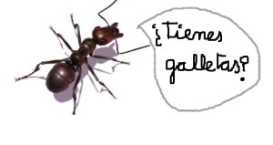 hormiga_galletas